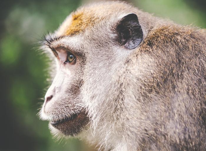 palm-yagi-neden-kotu-zararli-orangutan-yagmur-ormanlari