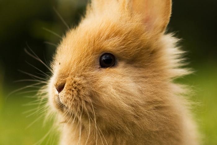 avrupa-birligi-hayvan-deneylerini-yasakladi