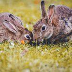 Hayvan Deneyi Politikası Belirsiz Markalar