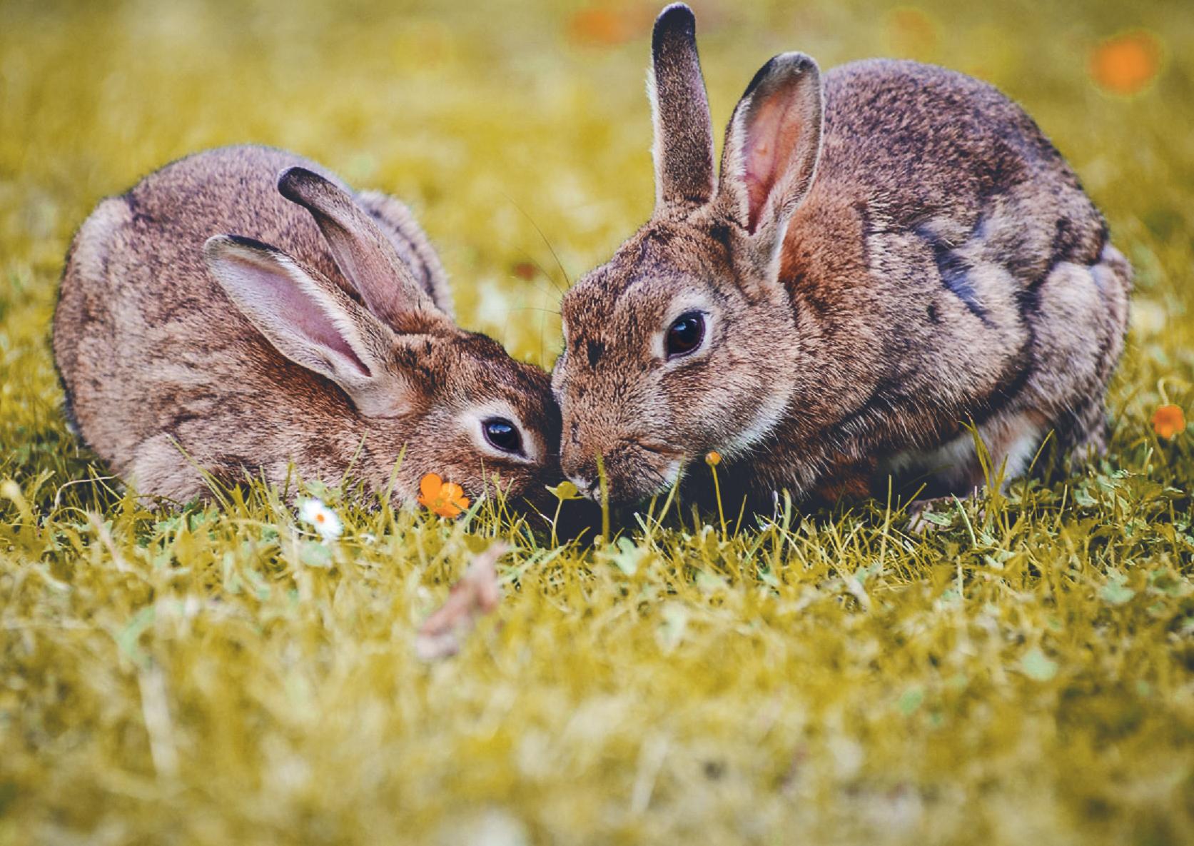 hayvan deneyleri tavşan logosu kozmetik markaları
