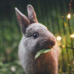 Hayvan Deneyi Yapıp Yapmadığı Belirsiz Markalar